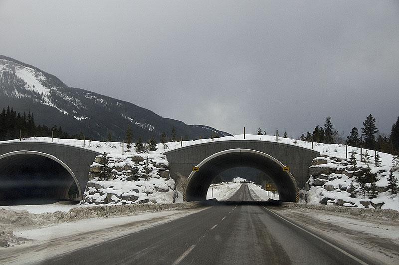 Wildlive-overpass